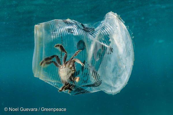 トークイベント〜海がプラスチックでいっぱいになる前に @ ヤマナシヘムスロイド